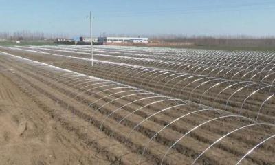 防疫春耕兩不誤 兗州區把農技課堂搬到田間地頭