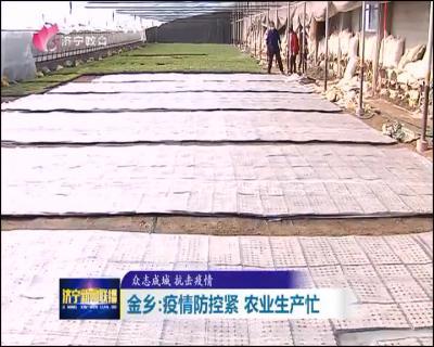 战疫情 抢春耕|金乡:疫情防控紧农业生产忙