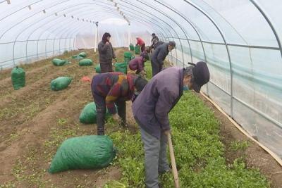 泗水爱心企业给山区贫困户捐赠蔬菜1.1万斤