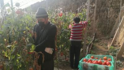 泗水縣中冊鎮幫菜農對接商超促銷售