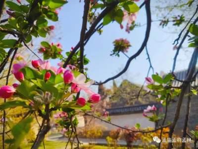 煙花三月,草長鶯飛,一起來看孟府春天
