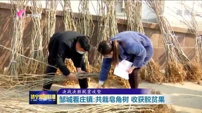 共栽皂角樹收獲脫貧果  鄒城看莊鎮發展庭院經濟拓展增收渠道