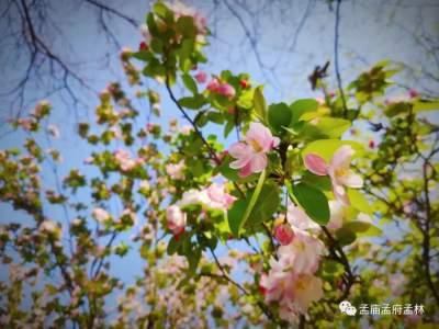 烟花三月,草长莺飞,一起来看孟府春天