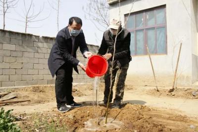 鄒城市看莊鎮:共栽皂角樹 收獲脫貧果