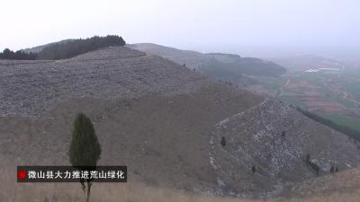 微山:栽下樹苗 綠化荒山