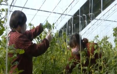 微山:加大脫貧攻堅力度  夯實產業發展基礎