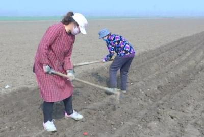 又到土豆種植季 鄒城的種植戶們忙碌起來了