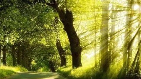 山東4地入選國家森林康養基地(第一批)公示名單