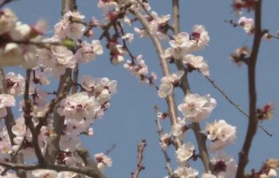 金乡:春暖花开处处景 踏青赏花正当时