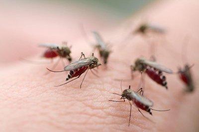 新冠病毒通過蚊子傳播?聽聽專家怎么說