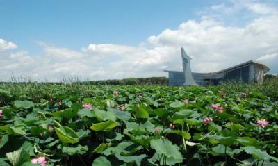 3月14日起,汶上蓮花湖濕地景區恢復開放