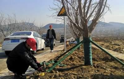 美景在望!泗水龍灣湖示范區將打造北方最美櫻花大道