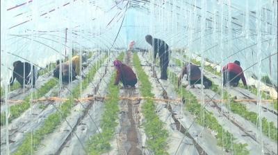 嘉祥:防疫不誤田間事 特色農業促增收