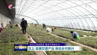 产、供、销一条龙 汶上甘薯产业成乡村振兴新引擎