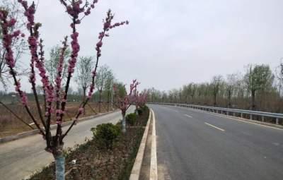 """泗河两岸""""绿""""染""""彩""""绘 景观带两岸雏形初现"""