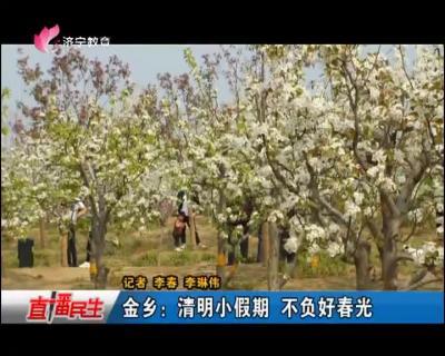 金乡:清明小长假 不负好春光