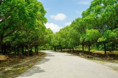 濟寧出臺措施,破壞森林資源將被嚴肅追責