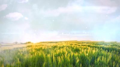《济宁农业》专家课堂:小麦病虫害防治