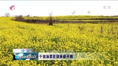 微山:千亩油菜花迎来盛开期