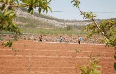 不负春光播种希望 泗水县播种花生10万亩