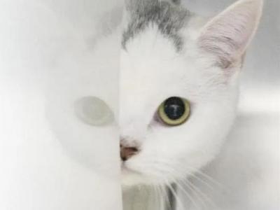专家:有必要研究猫等宠物是否感染新冠,但不必恐慌