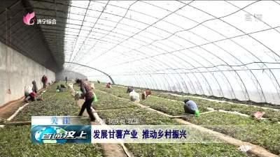 发展甘薯产业 推动乡村振兴