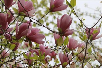 四月太白湖景區賞花季,你如約而至了嗎?