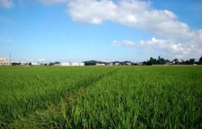 鄒城農村集體產權制度改革試點典型經驗被農業農村部推廣