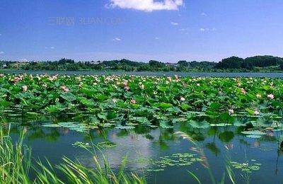 微山湖旅游区5A级景区绿化提升工程全面启动