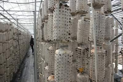 魚臺縣大力發展高效特色農業 毛木耳栽培引領全國