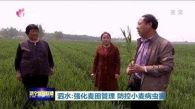泗水组织农业专家深入田间?指导农户加强麦田管理