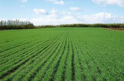 嘉祥種植戶用上植保無人機 智慧農業發展勢頭強勁
