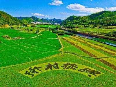 鄉村振興濟寧行 | 兗州區小孟鎮  五大產業助力鄉村振興