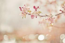 第三十六期濟寧優秀原創歌曲展播-《期待春天》合唱版