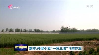 """嘉祥開展""""一噴三防""""飛防作業 確保42000多畝小麥豐產豐收"""