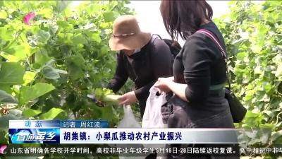 金鄉胡集鎮:小梨瓜推動農村產業振興