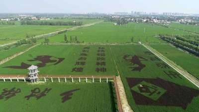 """濟寧兩縣區被命名為""""山東省農產品質量安全縣"""""""