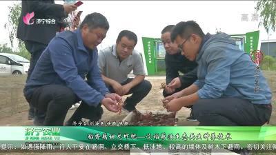 稻香藕甜龙虾肥——谈稻藕渔生态共生种养技术