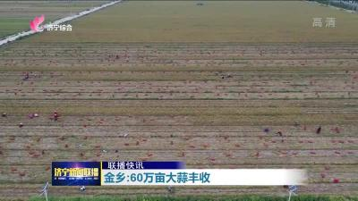 97.4%!金鄉60萬畝大蒜收獲已接近尾聲