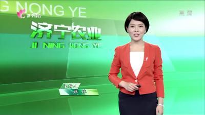 济宁农业——20200519