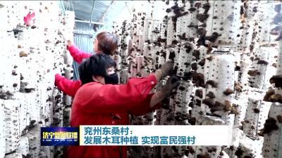 领航|兖州东桑村:发展木耳种植 实现富民强村