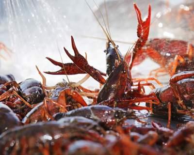 吃货福音!第四届中国·鱼台龙虾节要来了