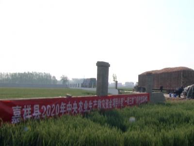 """保夏粮丰收 嘉祥县4万余亩小麦""""一喷三防""""促生产"""