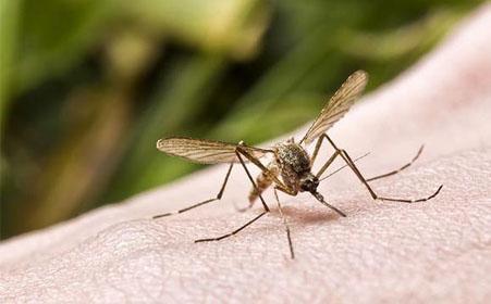 """提醒  """"蚊子大軍""""將至 防蚊要趁早 滅蚊效果好"""