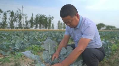 济宁特菜种植大户孔祥宏:我致富了,想让身边的人日子过得也更好