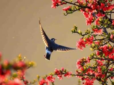国际生物多样性日|生态保护没有终点 离不开每个人的参与