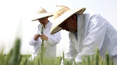 """汶上推進高標準農田建設 """"藏糧于地""""保豐收"""