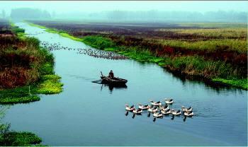 林红玉在微山县调研南四湖保护整治利用、文旅开发工作