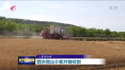 泗水微山小麦开镰收割