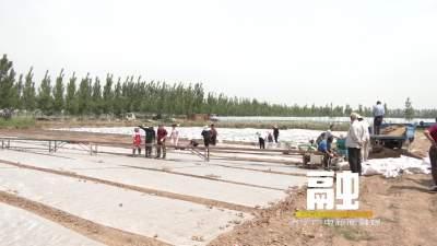 """任城区推广育秧新技术新模式 22万亩水稻育秧跑出""""加速度"""""""